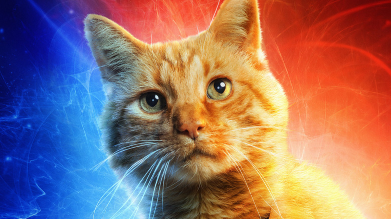 Who Knew That Cats Are Their Protectors >> Why Captain Marvel S Cat Is More Important Than We Knew